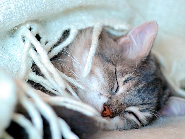формы протекания коронавируса кошек