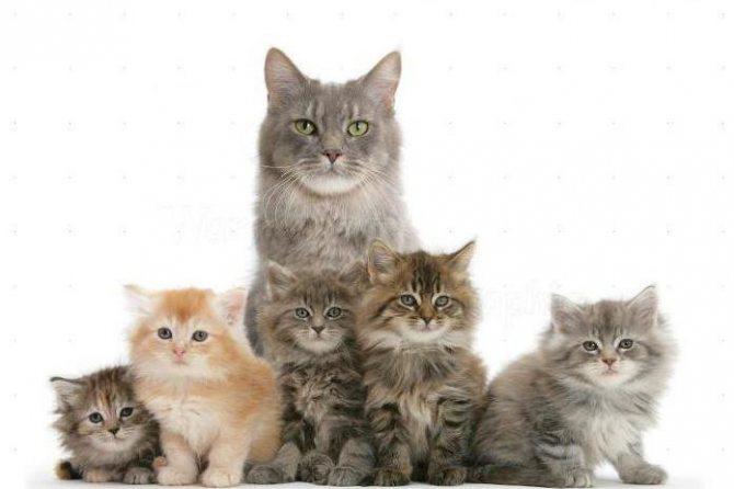 фортифлора для кошек инструкция