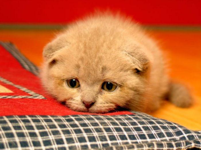 фоспасим для кошек