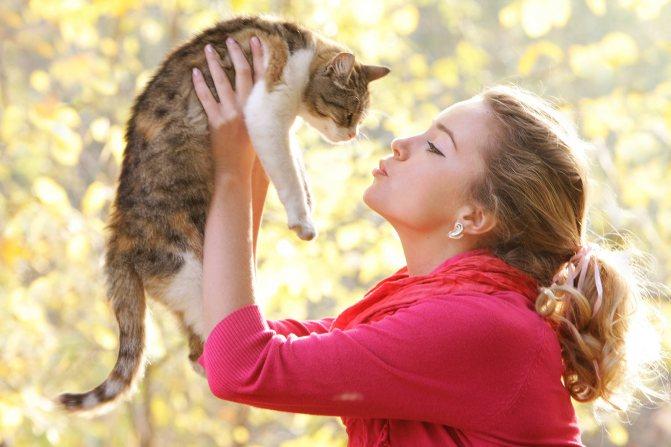 Фото 2 - как отличить кота от кошки