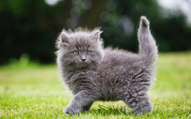 Фото 3 - как назвать кота серого цвета