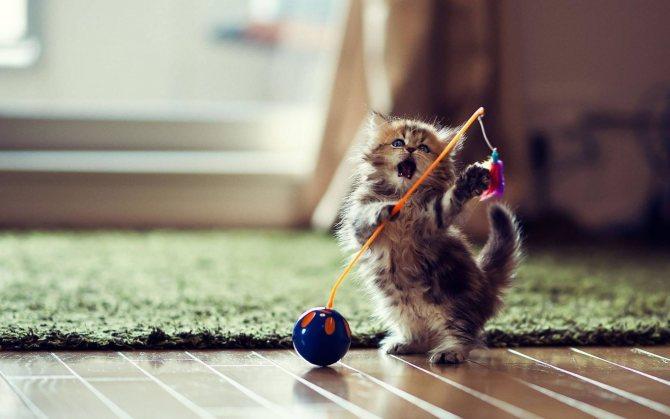 Фото 3 - как отличить кота от кошки