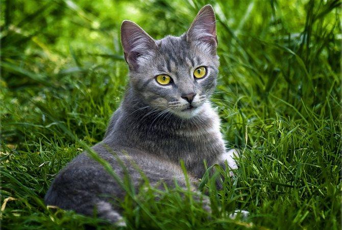 Фото 4 - как назвать кота серого цвета