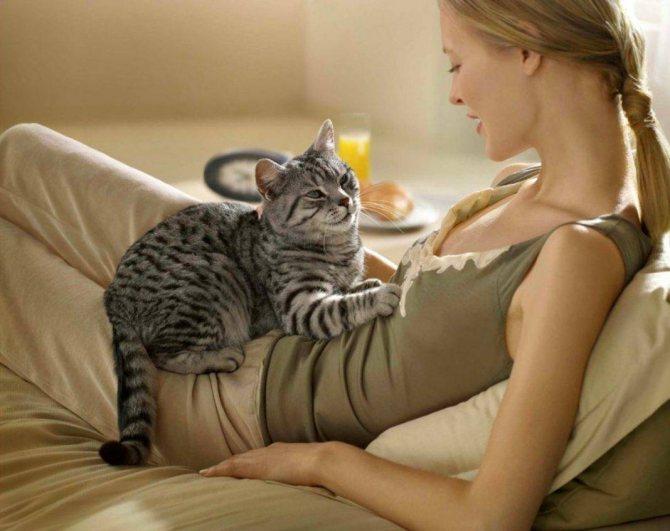 Фото 4 - как отличить кота от кошки