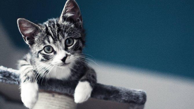 Фото - как назвать кота серого цвета