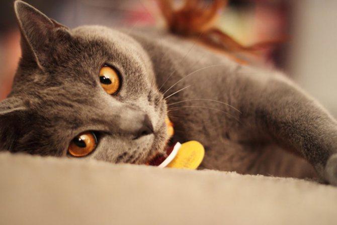 Фото картезианской кошки.jpg