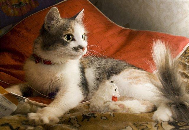 Фото прирученных домашних кошек