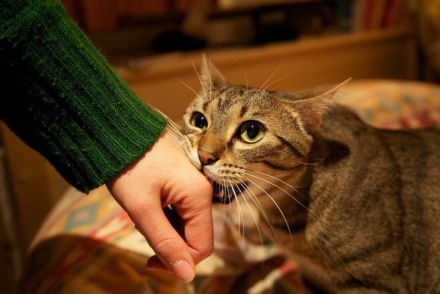 фото с сайта: iheartcats.com