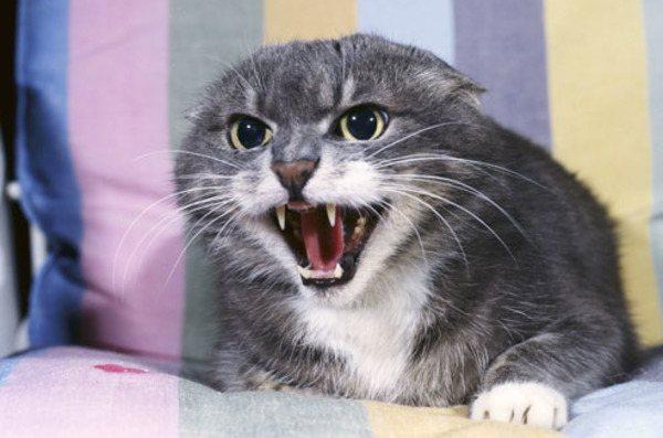 фото с сайта: pets.webmd.com