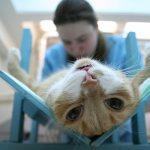 фото с сайта: vet39.ru