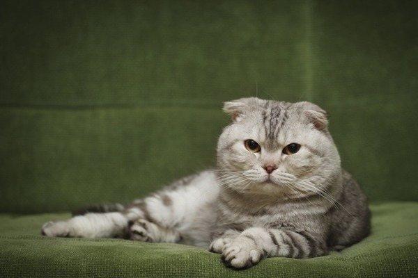 фото с сайта: www.pets4homes.co.uk