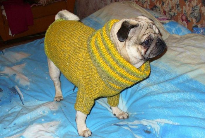 фото свитера на собаке