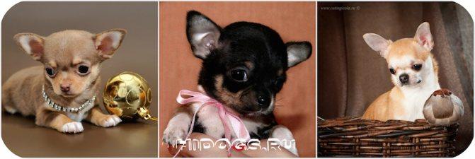 Фотографии милых щеночков.