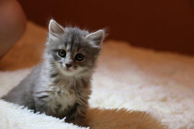 Фталазол для кошек при поносе дозировка