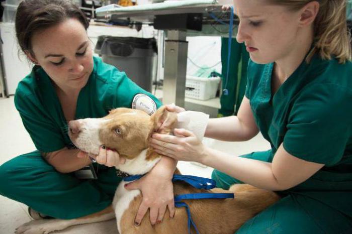 Гастроэнтерит у собаки лечение