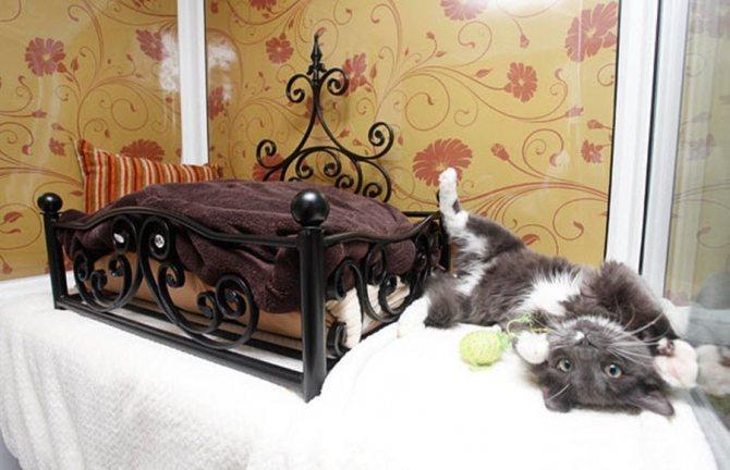 Где можно оставить кошку на время отпуска