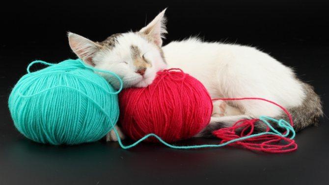 Где спят кошки: энергетика