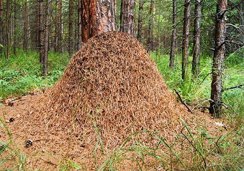 Где живут муравьи