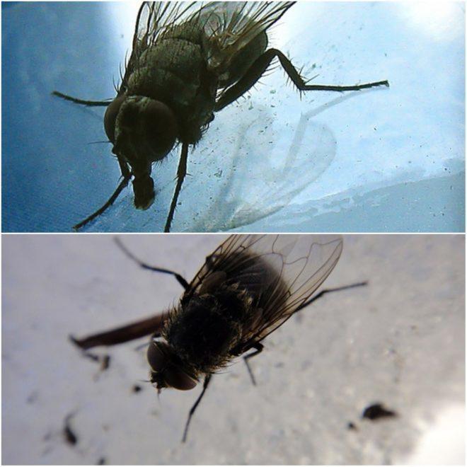 Где зимуют мухи? Куда они деваются в холодное время года?