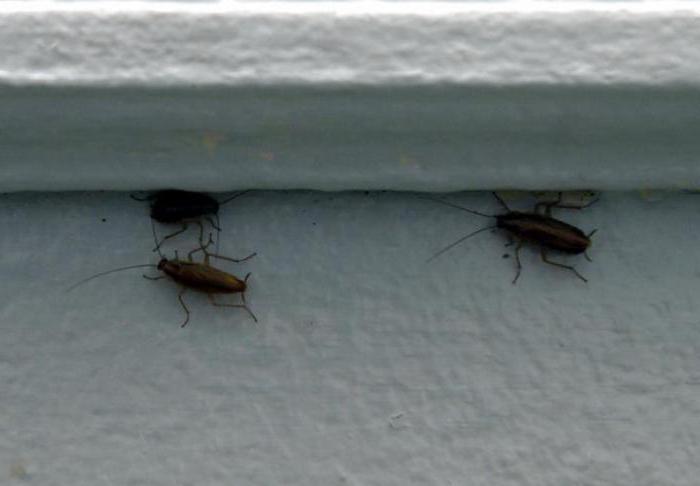 гель Дохлокс от тараканов отзывы инструкция