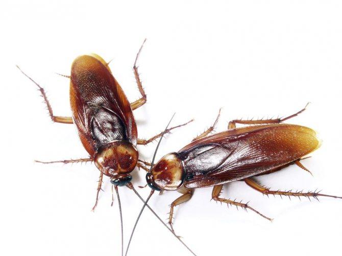 гель раптор от тараканов отзывы