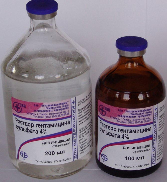 Гентамицин 4 - инъекции для животных при бактериальных заболеваниях
