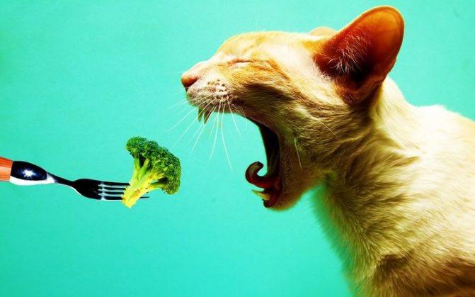 Гипоаллергенное питание для кота