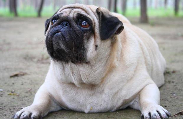 гипотиреоз у собак причины