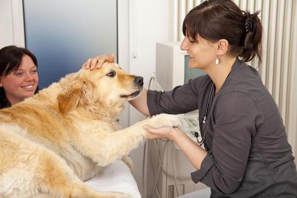 гипотиреоз у собак признаки