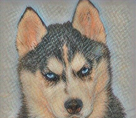 Глаукома собак