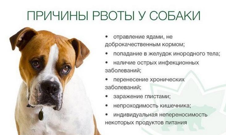 Главные причины, почему собаку рвет едой