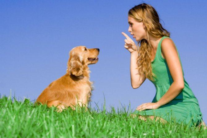 Главный принцип воспитания - доступно и четко объяснить собаке, как ей можно себя вести, а как категорически запрещено