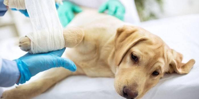 Глюкозамин с хондроитином для собак