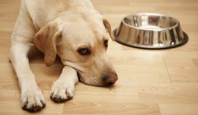 Голодание для собак