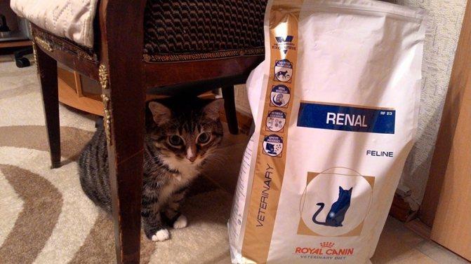 Готовые промышленные корма для кошек с ХПН