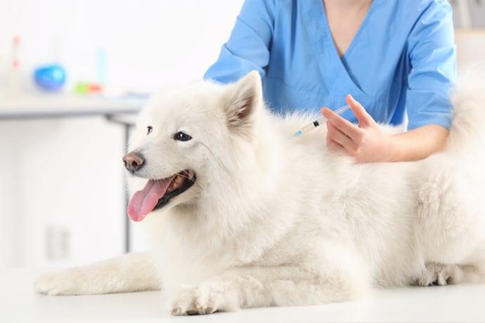 график прививок щенков
