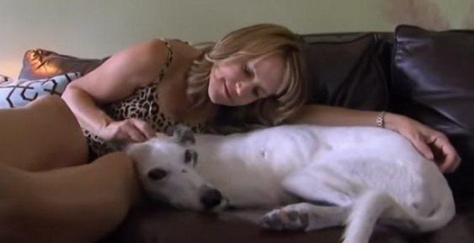 грейхаунд собака для дивана