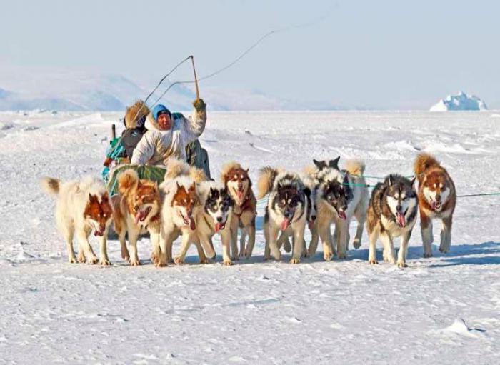 гренландская собака