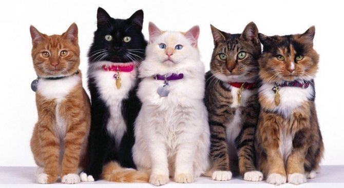 Группа хвостатых животных