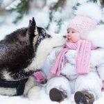хаски и дети взаимоотношения