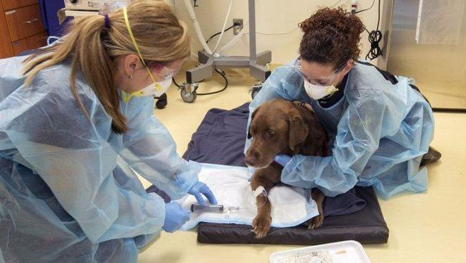 Химиотерапия для собаки