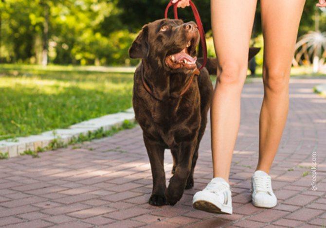 """'Хвалите собаку за правильное выполнение команды """"рядом""""' width=""""870"""