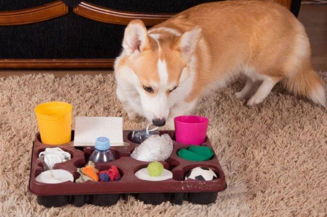 Игра для собак Сборная солянка