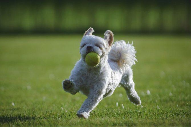 Игра с мячем