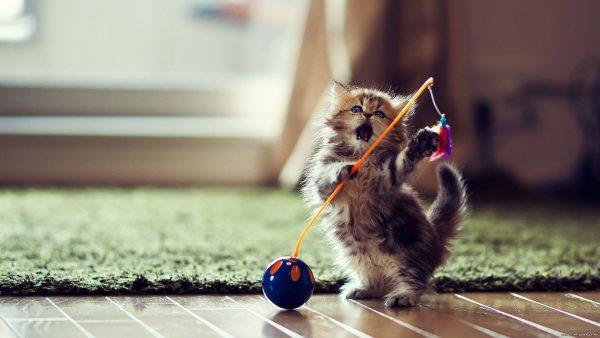 Играющий котёнок