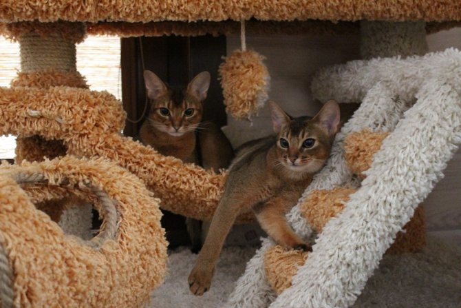 Игровой домик для кошки.