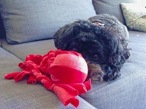 Игрушка для собаки осьминог