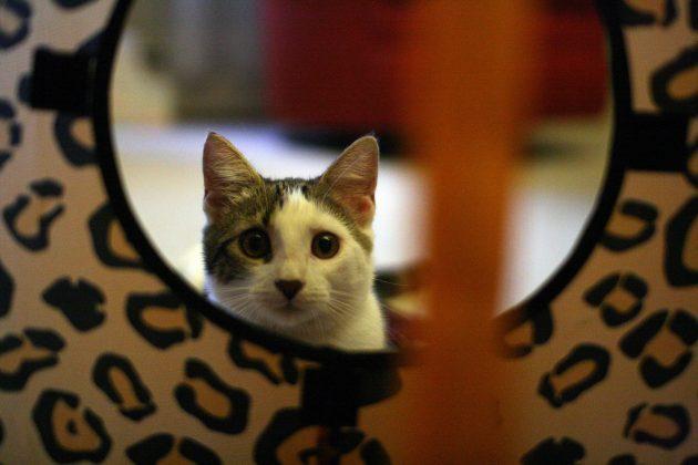 игрушки для кошек: лабиринты