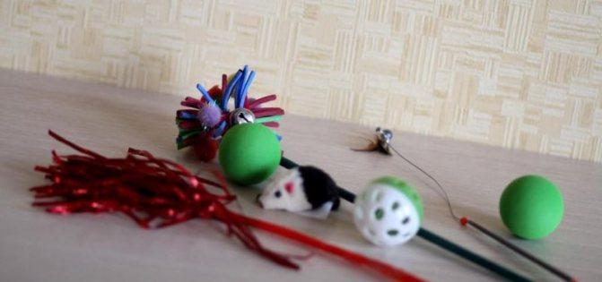 игрушки для мейн куна