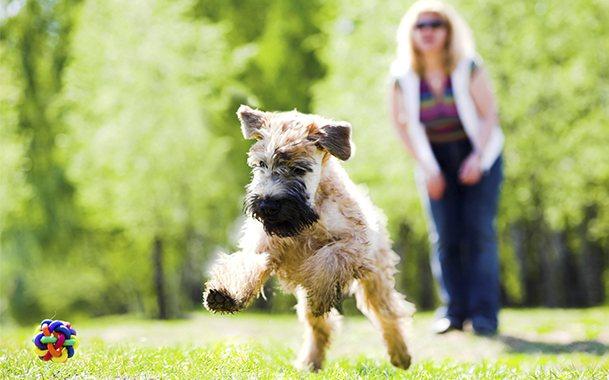 Игры на свежем воздухе помогут собаке побороть страх перед улицей